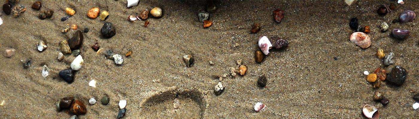 Shells & Stones