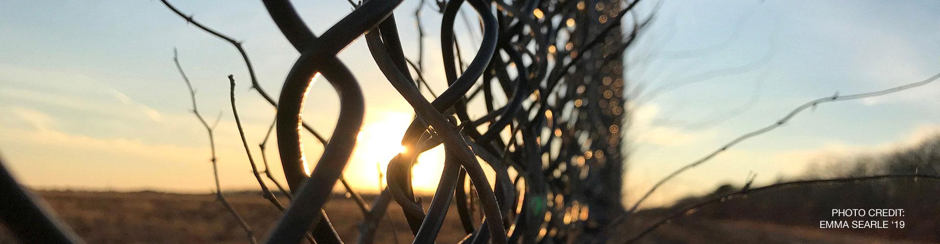 Fence – Closeup
